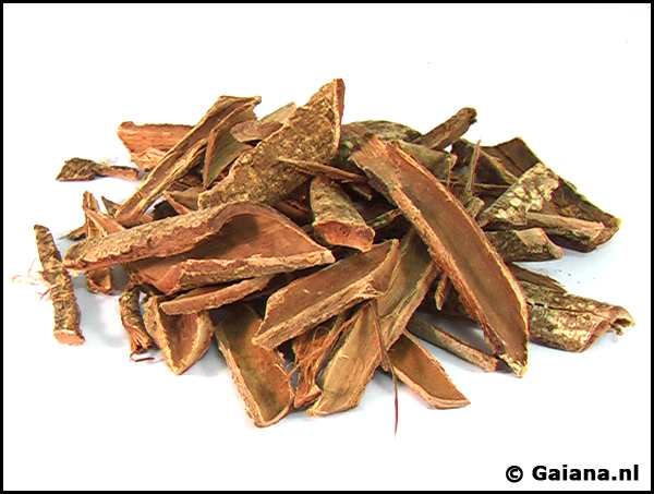 Acacia confusa root bark