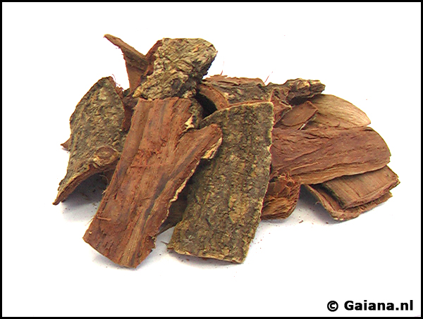 Acacia confusa trunk bark