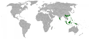 Acacia-confusa-range-map